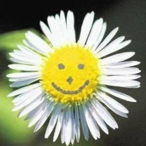 sarah paroletti fiori di bach