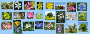 fiori di bach corso intensivo nanay