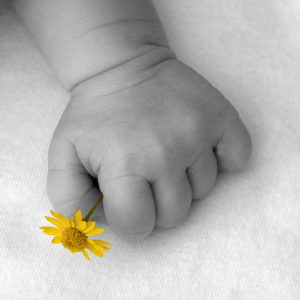ob_303302_baby-hand-and-yellow-flower-2-rob-gree
