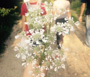 fiore sabina